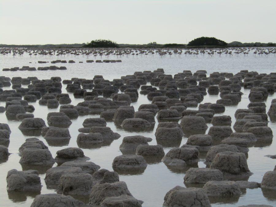Humedal de Importancia Especialmente para la Conservación de Aves Acuáticas Reserva Ría Lagartos, Yucatán